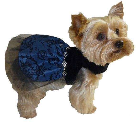 Dog Clothes Patterns Fresh 137 Best Images About Clothes for Ladybug S Xxs On Of Innovative 46 Pics Dog Clothes Patterns
