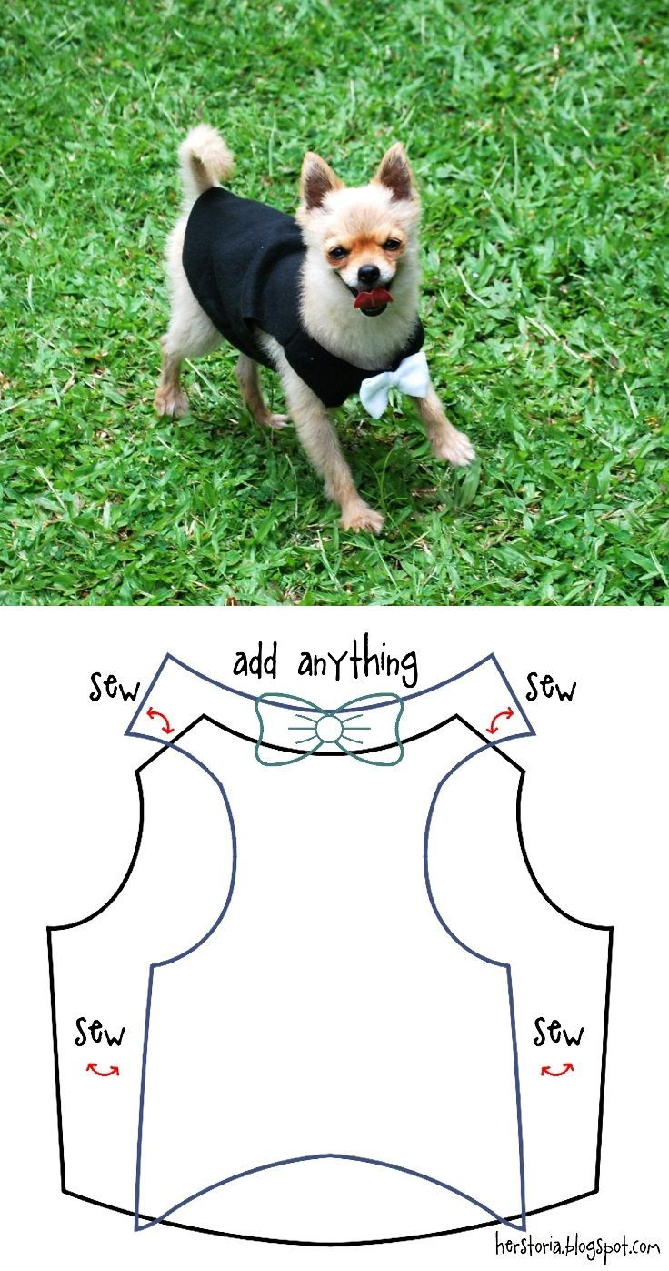 Dog Clothes Patterns Inspirational 250 Best Neve & Me A Maltese Dog and Her Human Friend Of Innovative 46 Pics Dog Clothes Patterns