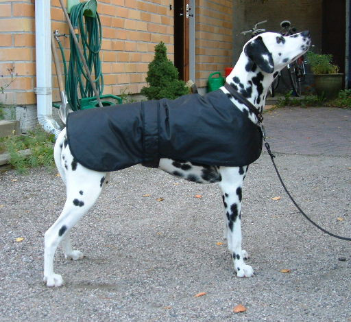 Dog Coat Pattern Best Of 35 Diy Dog Coats Of Contemporary 40 Photos Dog Coat Pattern