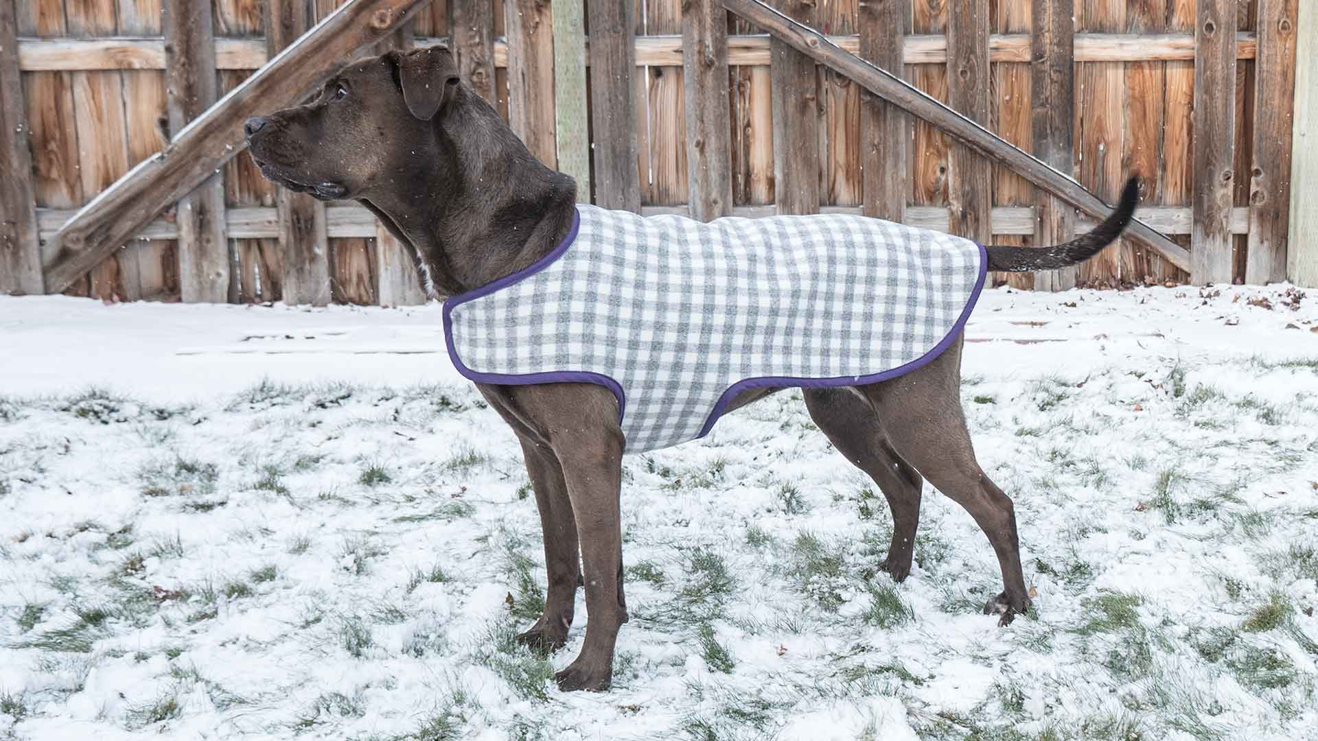 Dog Coat Pattern Best Of Dog Coat Professor Pincushion Of Contemporary 40 Photos Dog Coat Pattern