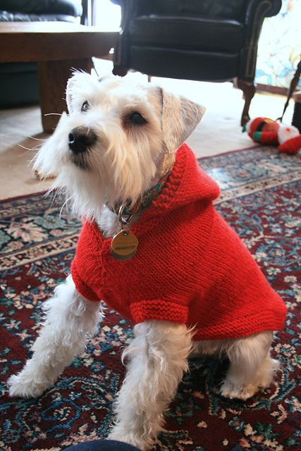 Dog Coat Pattern Free Awesome 25 Best Ideas About Dog Sweater Pattern On Pinterest Of Contemporary 42 Models Dog Coat Pattern Free