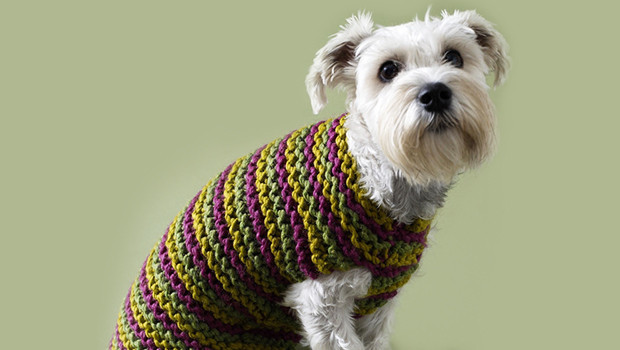 Dog Coat Pattern Free Unique top 5 Free Dog Sweater Knitting Patterns Of Contemporary 42 Models Dog Coat Pattern Free