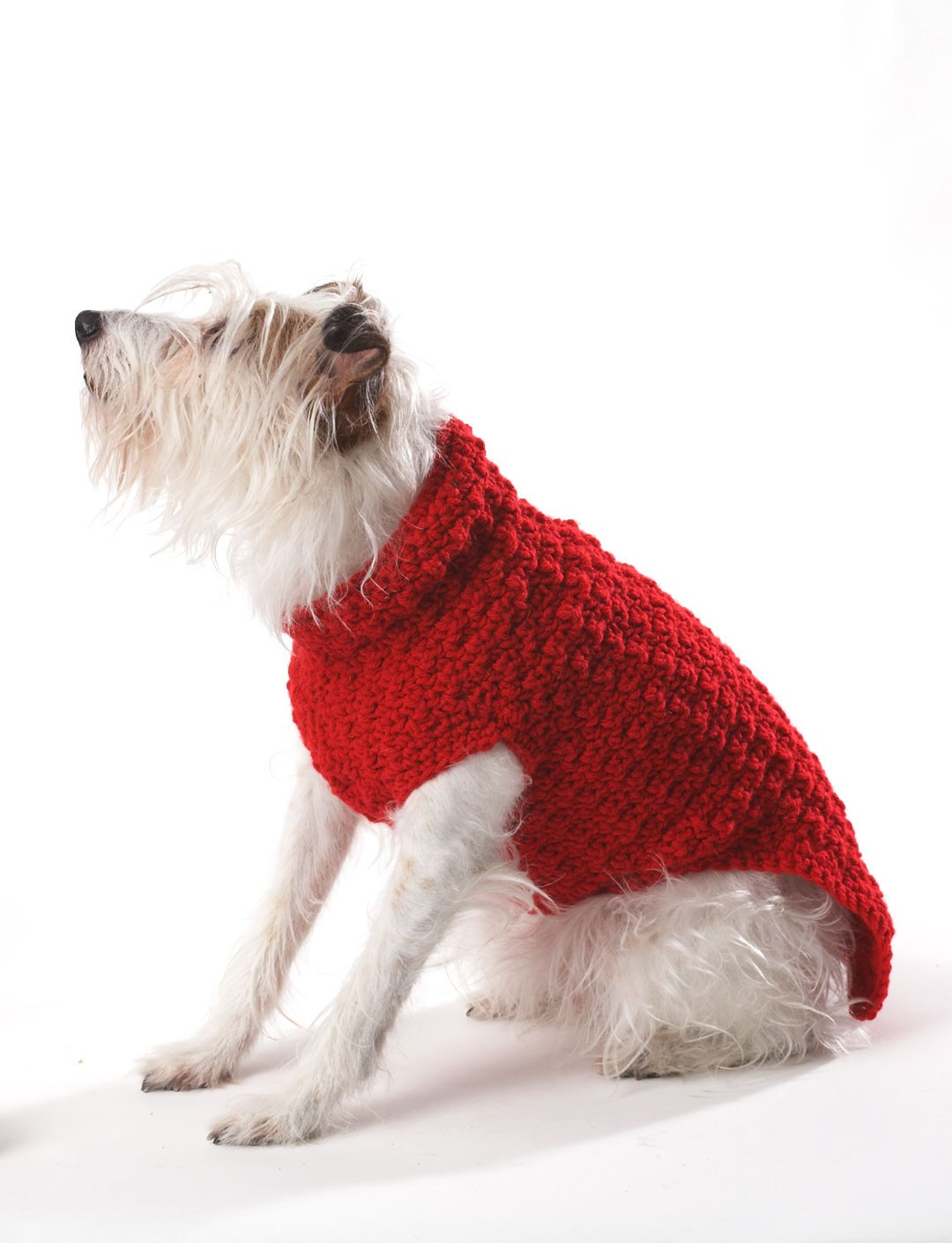 Dog Coat Pattern Lovely Bernat Crochet Dog Coat Crochet Pattern Of Contemporary 40 Photos Dog Coat Pattern