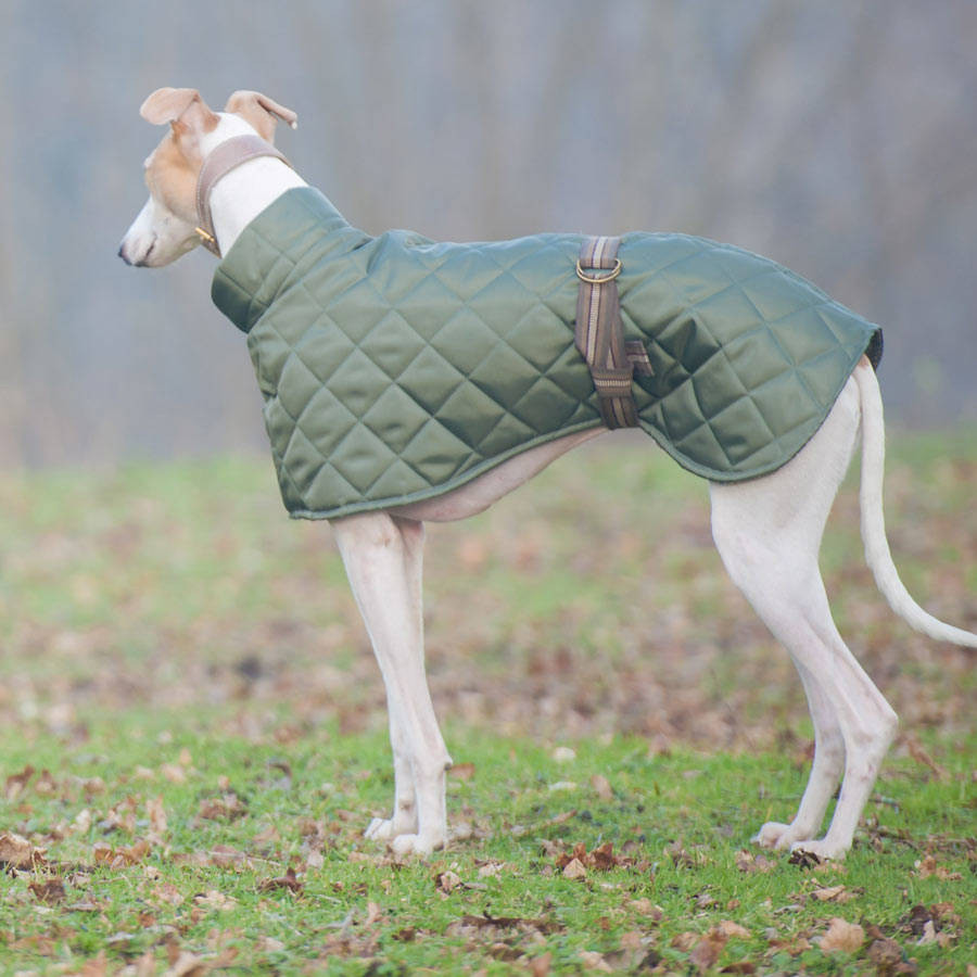 Dog Coat Pattern Luxury Dog Coat Pattern by Redhound for Dogs Of Contemporary 40 Photos Dog Coat Pattern