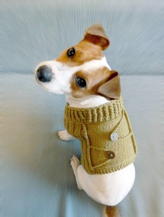 Dog Jacket Pattern Awesome 44 Best Images About Knitting Patterns for Dogs On Of Marvelous 45 Photos Dog Jacket Pattern