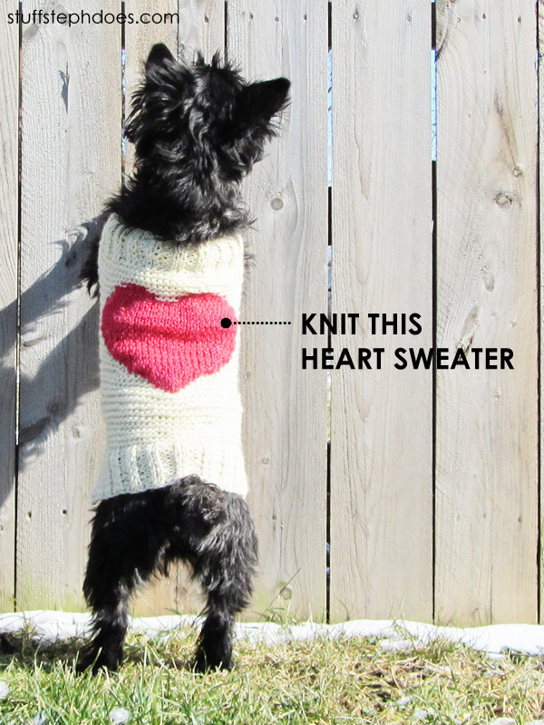 Dog Sweater Knitting Pattern Beautiful Knitted Dog Sweaters to Keep Your Pooch Warm Of Superb 38 Pictures Dog Sweater Knitting Pattern