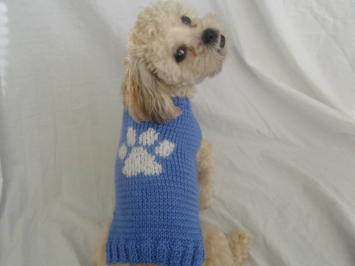Dog Sweater Knitting Pattern Elegant Hand Knit Blue Dog Sweater with Paw Print for Small Dogs Of Superb 38 Pictures Dog Sweater Knitting Pattern