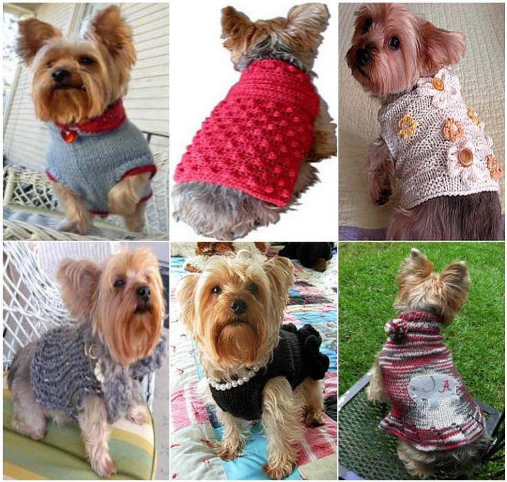 Dog Sweater Patterns Best Of Crochet Dog Sweaters Free Crochet Patterns & Video Tutorials Of Unique 41 Photos Dog Sweater Patterns