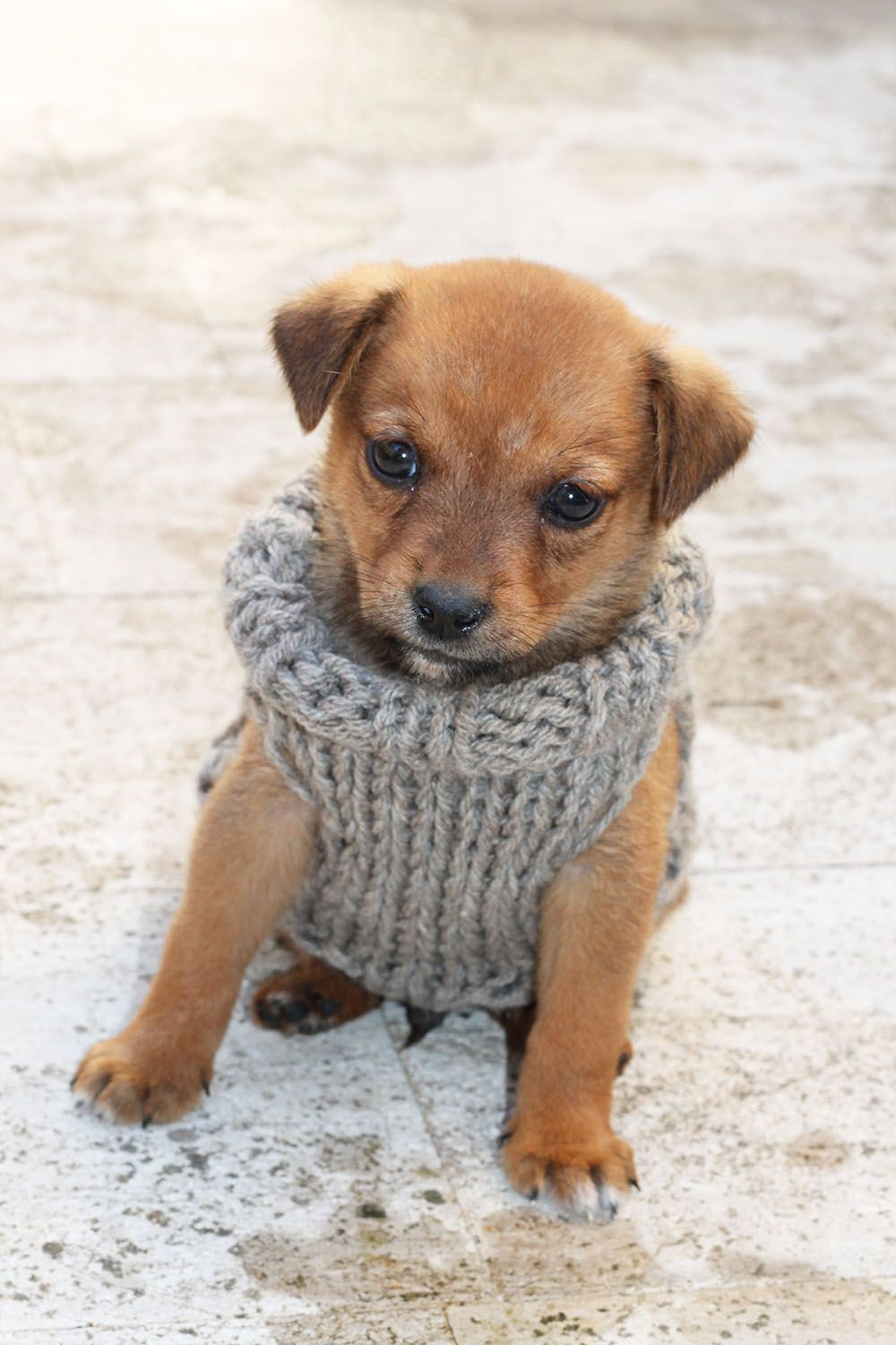 Dog Sweater Patterns Elegant Free Knitting Pattern for A Puppy Sweater Of Unique 41 Photos Dog Sweater Patterns