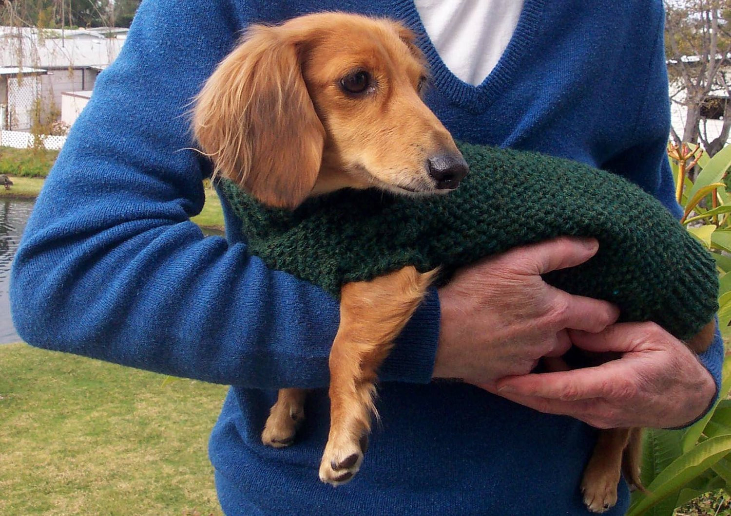 Dog Sweater Patterns Lovely Pdf Download Knit Pattern for Miniature Dachshund Dog Sweater Of Unique 41 Photos Dog Sweater Patterns
