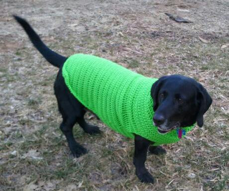 Dog Sweater Patterns Unique Crocheted Dog Sweater Pattern Of Unique 41 Photos Dog Sweater Patterns