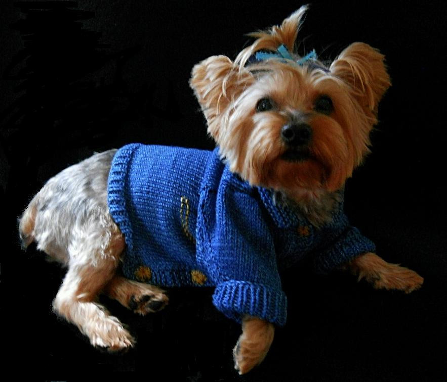 Dog Sweater Patterns Unique Yorkie Sweaters Of Unique 41 Photos Dog Sweater Patterns