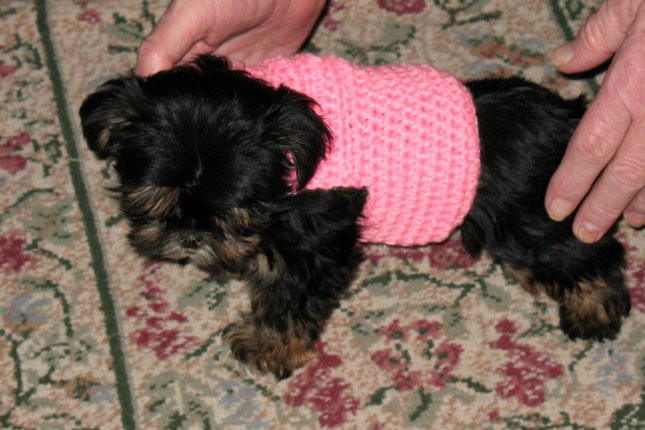 Elegant Crocheted Dog Sweaters Crocheted Clothes for Dogs Easy Crochet Dog Sweater Pattern Free Of New 48 Images Easy Crochet Dog Sweater Pattern Free