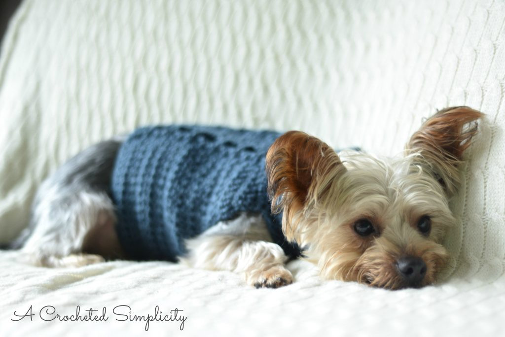 Elegant Free Charity Crochet Pattern Cabled Dog Sweater A Free Crochet Pattern for Small Dog Sweater Of Adorable 48 Images Free Crochet Pattern for Small Dog Sweater