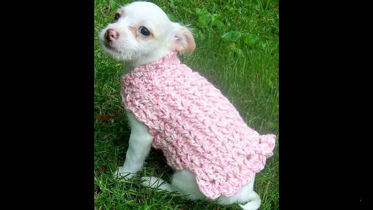 Elegant Free Crochet Sweater Patterns Free Crochet Pattern for Small Dog Sweater Of Adorable 48 Images Free Crochet Pattern for Small Dog Sweater