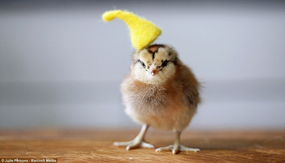 Elegant Grapher Takes Inspiration From Daughter 7 to Dress Baby Chicken Hat Of Awesome Cute Baby Chickens with Hats Baby Chicken Hat