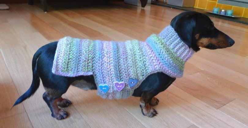 Elegant How to Crochet A Dog Sweater Tips and Tricks to Keep Your Easy Knit Dog Sweater Of Charming 49 Ideas Easy Knit Dog Sweater