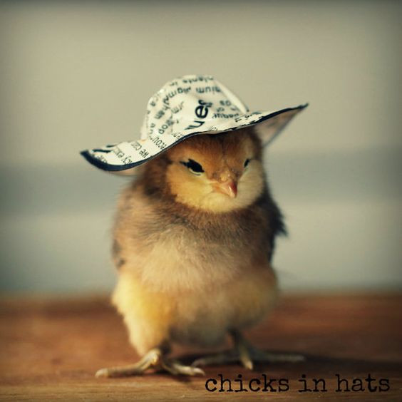 Elegant Wel E to Chicks In Hats where All the Chicks are Briefly Baby Chicken Hat Of Elegant Grapher Takes Inspiration From Daughter 7 to Dress Baby Chicken Hat