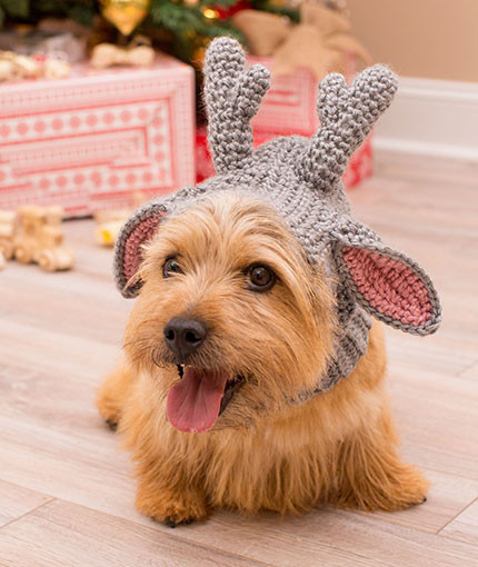17 Crochet and Knit Pet Perfect Projects