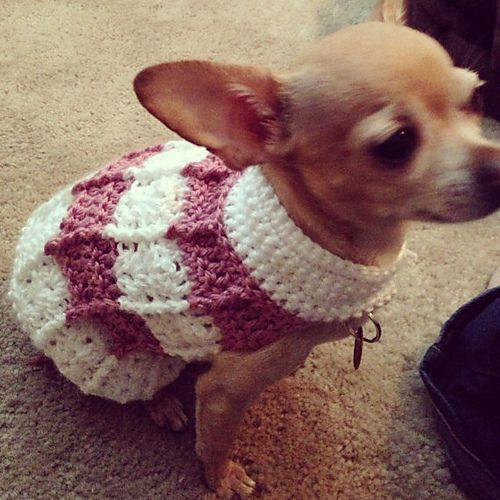Free Crochet Dog Patterns Fresh Best 25 Dog Sweater Pattern Ideas On Pinterest Of Superb 45 Pictures Free Crochet Dog Patterns