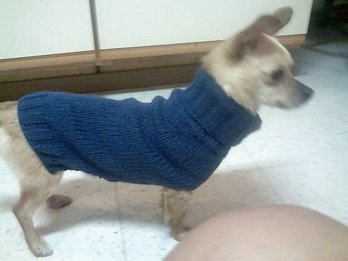 Free Dog Sweater Patterns Awesome 17 Best Images About Chihuahua Love On Pinterest Of Innovative 47 Models Free Dog Sweater Patterns