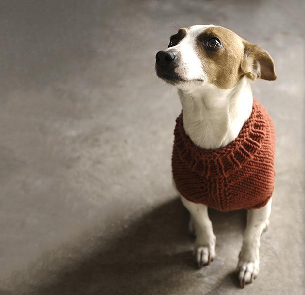 Free Dog Sweater Patterns Awesome top 5 Free Dog Sweater Knitting Patterns Of Innovative 47 Models Free Dog Sweater Patterns
