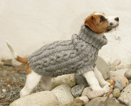 Free Dog Sweater Patterns Lovely Free Dog Jumper Patterns Loveknitting Blog Of Innovative 47 Models Free Dog Sweater Patterns
