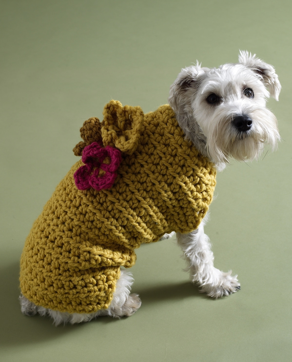 Free Dog Sweater Patterns New Keep Your Dog Warm with A Crochet Dog Sweater Of Innovative 47 Models Free Dog Sweater Patterns