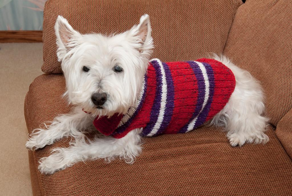 Free Dog Sweater Patterns Unique 5 Pet Knitting Patterns for Furry Friends Of Innovative 47 Models Free Dog Sweater Patterns