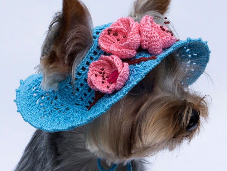 31 Cool Dog Hats For Dogs All Shapes And Sizes