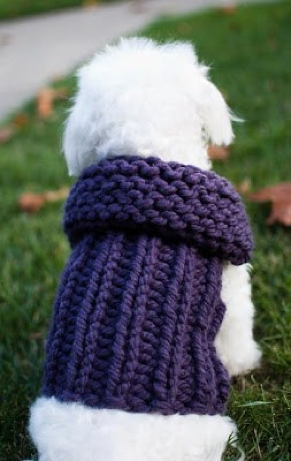 Fresh 7 Knitting Patterns for Your Pet – Knitting Free Knitting Pattern for Dog Sweater Of Amazing 49 Photos Free Knitting Pattern for Dog Sweater