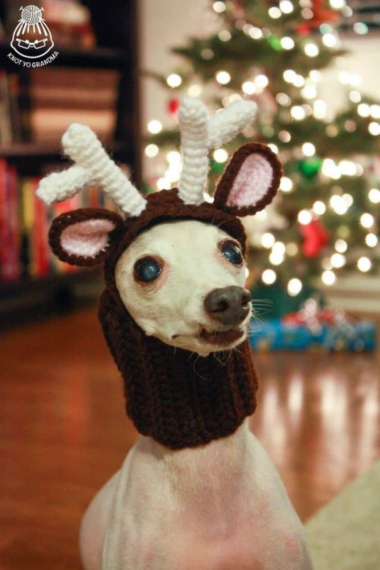 Fresh Crochet Dog Hat Free Patterns with Video Crochet Dog Hat Of Marvelous 45 Pictures Crochet Dog Hat