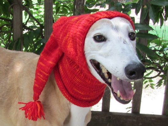 crochet knitted dog hats