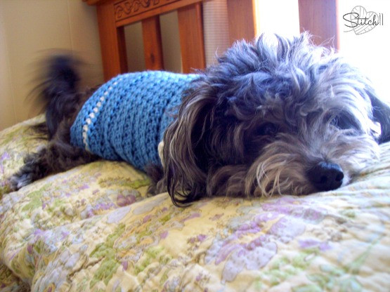 Fresh Dress Up Your Pet Day 2015 Roundup Of 10 Free Crochet Free Crochet Pattern for Small Dog Sweater Of Adorable 48 Images Free Crochet Pattern for Small Dog Sweater