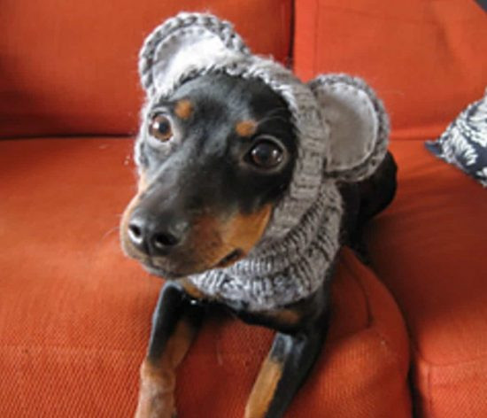 Fresh Knitted Dog Hats with Ears Easy Free Patterns Dog Knitting Patterns Free Of Superb 44 Pictures Dog Knitting Patterns Free