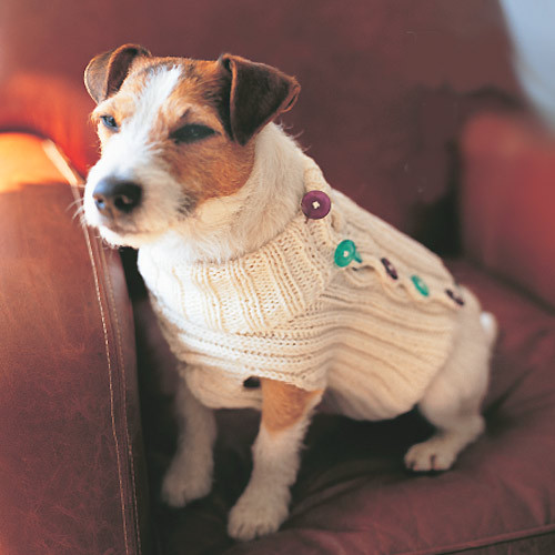 Fresh the Best Sweaters and Coats to Knit for Your Dog – Free Free Knitting Pattern for Dog Sweater Of Amazing 49 Photos Free Knitting Pattern for Dog Sweater