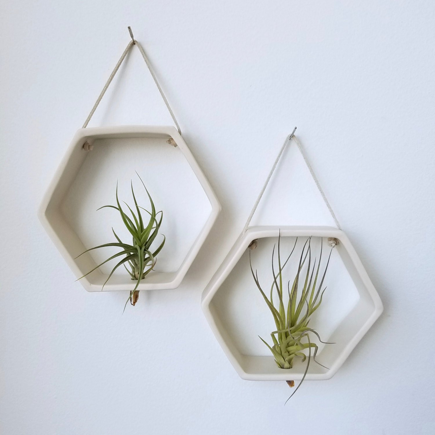 Hanging Plant Holders Fresh Porcelain Honey B Air Plant Holder Geometric Wall Hanging Of Wonderful 48 Ideas Hanging Plant Holders