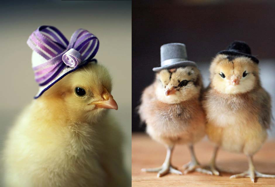 Inspirational Baby Chickens In Hats 34 Chicken Houses Baby Chicken Hat Of Elegant Grapher Takes Inspiration From Daughter 7 to Dress Baby Chicken Hat