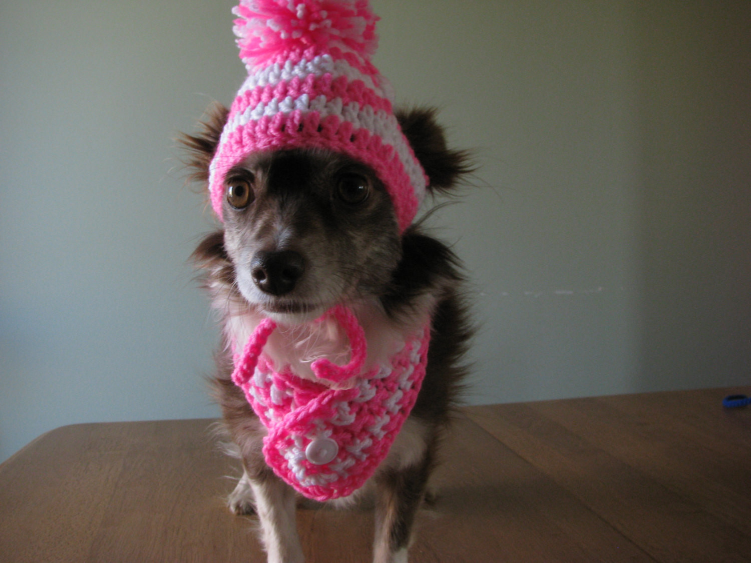 Inspirational Dog Beanie and Scarf Crochet Dog Hat and Scarf Crochet Dog Crochet Dog Hat Of Marvelous 45 Pictures Crochet Dog Hat