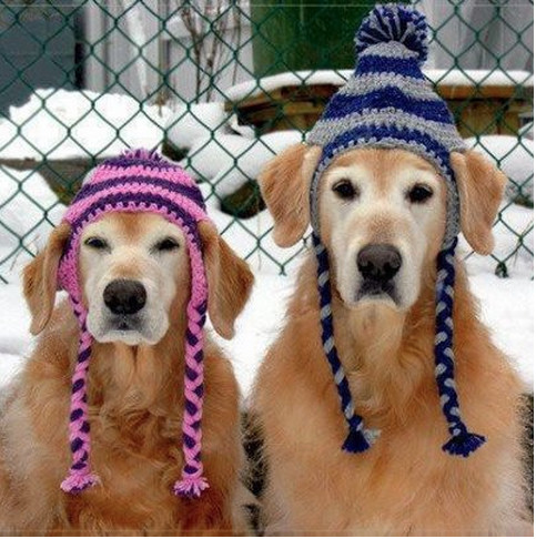Inspirational Looking for This Dog Hat Pattern Knitted Dog Hats Of Innovative 49 Images Knitted Dog Hats