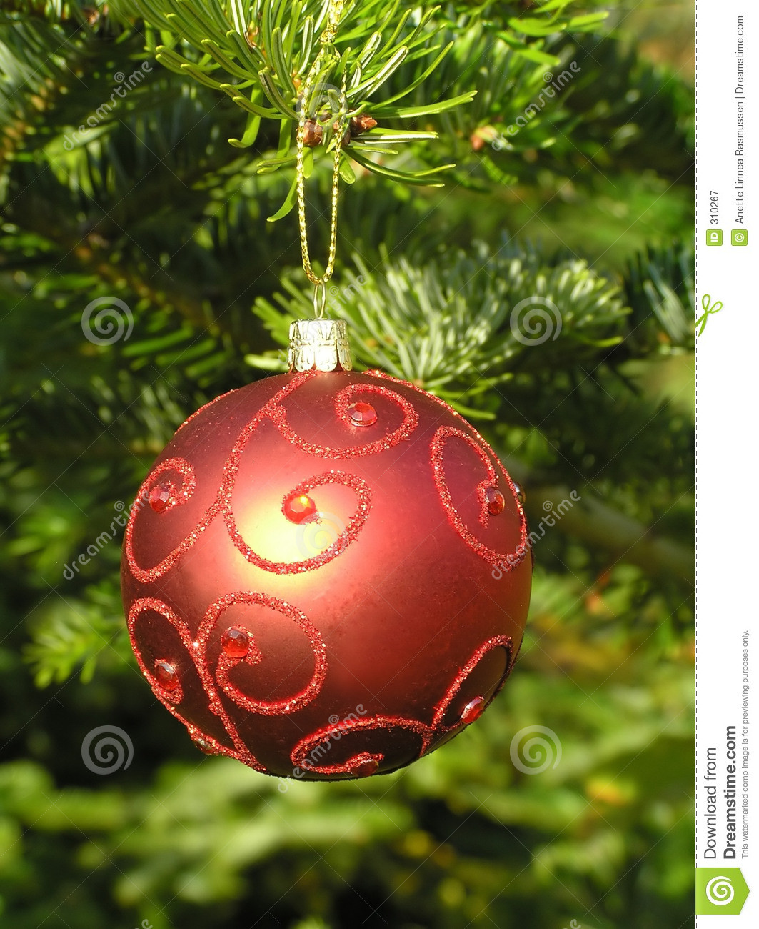 Inspirational Red Christmas Ball Hanging A Christmas Tree Stock Image Christmas Tree Balls Of Wonderful 50 Pictures Christmas Tree Balls