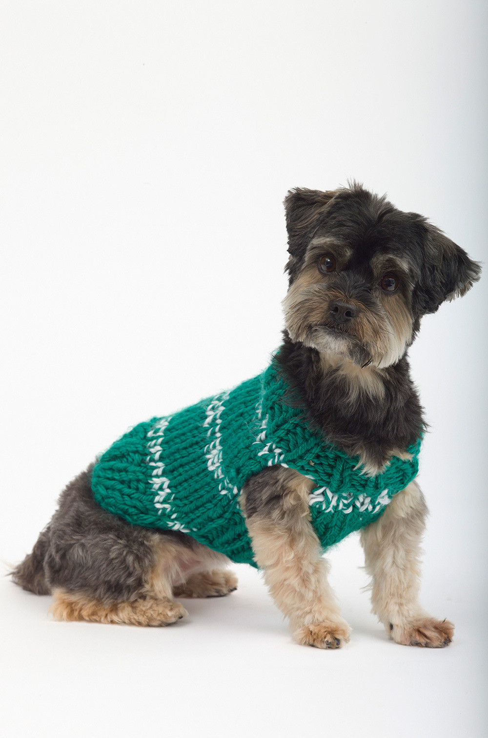 Inspirational top 5 Free Dog Sweater Knitting Patterns Knitting Patterns for Dog Sweaters for Beginners Of Luxury 41 Pictures Knitting Patterns for Dog Sweaters for Beginners