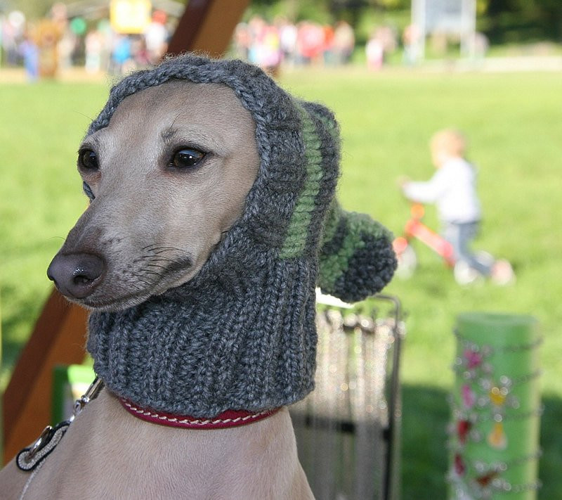 Lovely Reindeer Hat Knitting Pattern for Dogs Images Knitted Dog Hats Of Innovative 49 Images Knitted Dog Hats