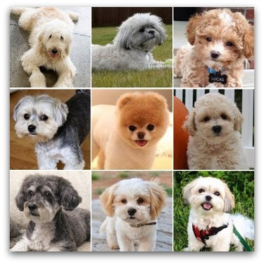 Lovely Teddy Bear Puppies for Sale Description Each Breed Stuffed Bears for Sale Of New 48 Ideas Stuffed Bears for Sale