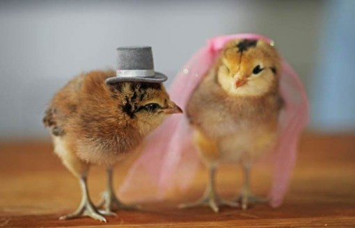Lovely top 10 Baby Chicks In Hats Baby Chicken Hat Of Elegant Grapher Takes Inspiration From Daughter 7 to Dress Baby Chicken Hat