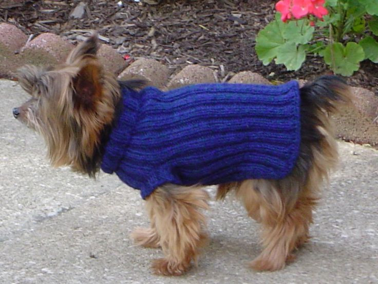 Luxury 60 Best Knitted Dog Sweater Patterns Images On Pinterest Easy Knit Dog Sweater Of Charming 49 Ideas Easy Knit Dog Sweater