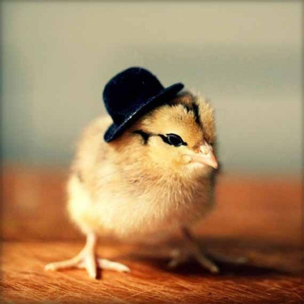 Luxury Animals Cute Fashion Design Crafts Hats Chicks Chickens Baby Chicken Hat Of Elegant Grapher Takes Inspiration From Daughter 7 to Dress Baby Chicken Hat