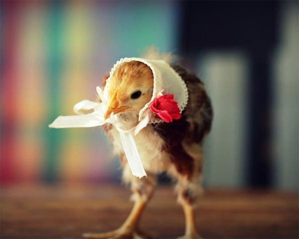 Luxury Cute Baby Chicks In Hats by Julie Persons Baby Chicken Hat Of Elegant Grapher Takes Inspiration From Daughter 7 to Dress Baby Chicken Hat