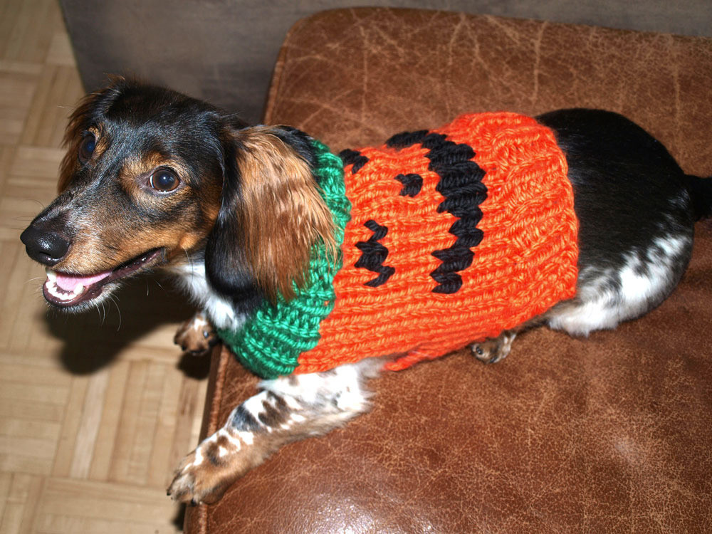 Luxury Jack O Lantern Dog Sweater In Lion Brand Hometown Usa L Knitting Patterns for Dog Sweaters for Beginners Of Luxury 41 Pictures Knitting Patterns for Dog Sweaters for Beginners