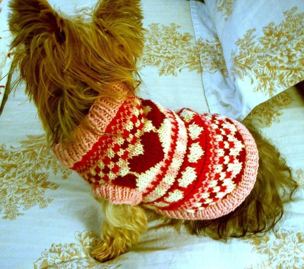 Luxury Knitted Dog Sweaters to Keep Your Pooch Warm Free Knitting Pattern for Dog Sweater Of Amazing 49 Photos Free Knitting Pattern for Dog Sweater